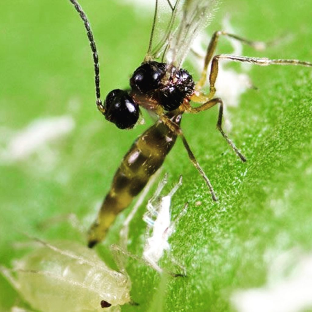 We Provide Beneficial Insect